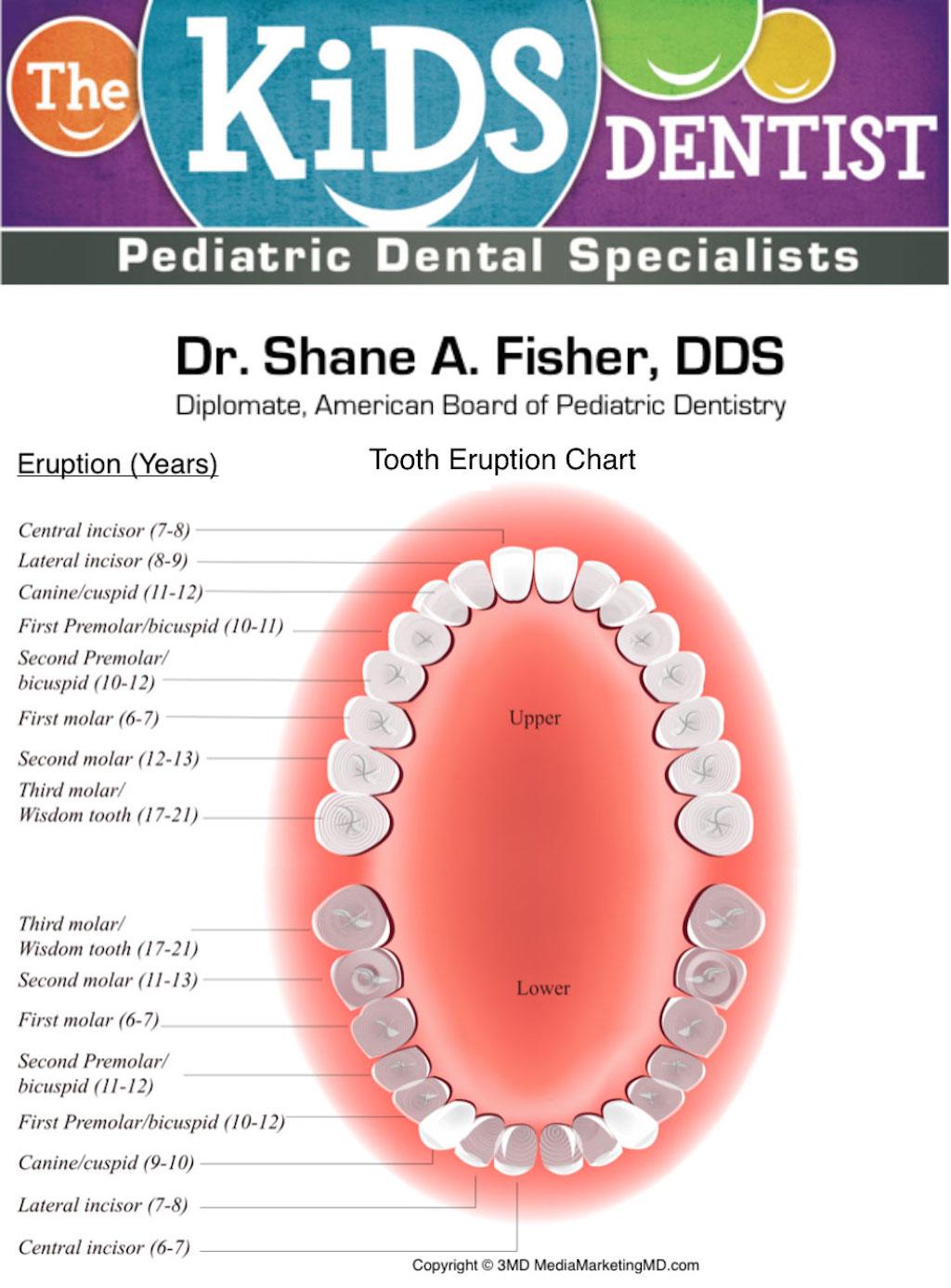 Adult teeth chart
